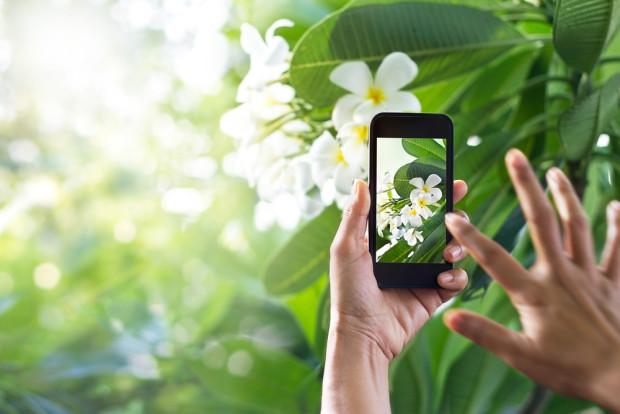 Keren Aplikasi Ini Bisa Identifikasi Aneka Jenis Tanaman Hortikultura Indonesia